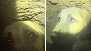 Puppy-Trapped-in-Well-Barış-Şengün