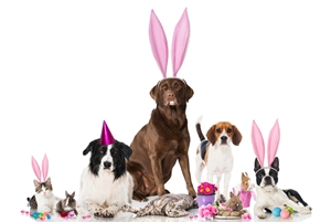 protect-your-pets-this-easter-_1299_608716_0_14102410_300